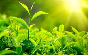 veliki izbor biljaka rasadnika