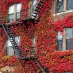 9-boston-ivy