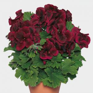 cveće prodaja