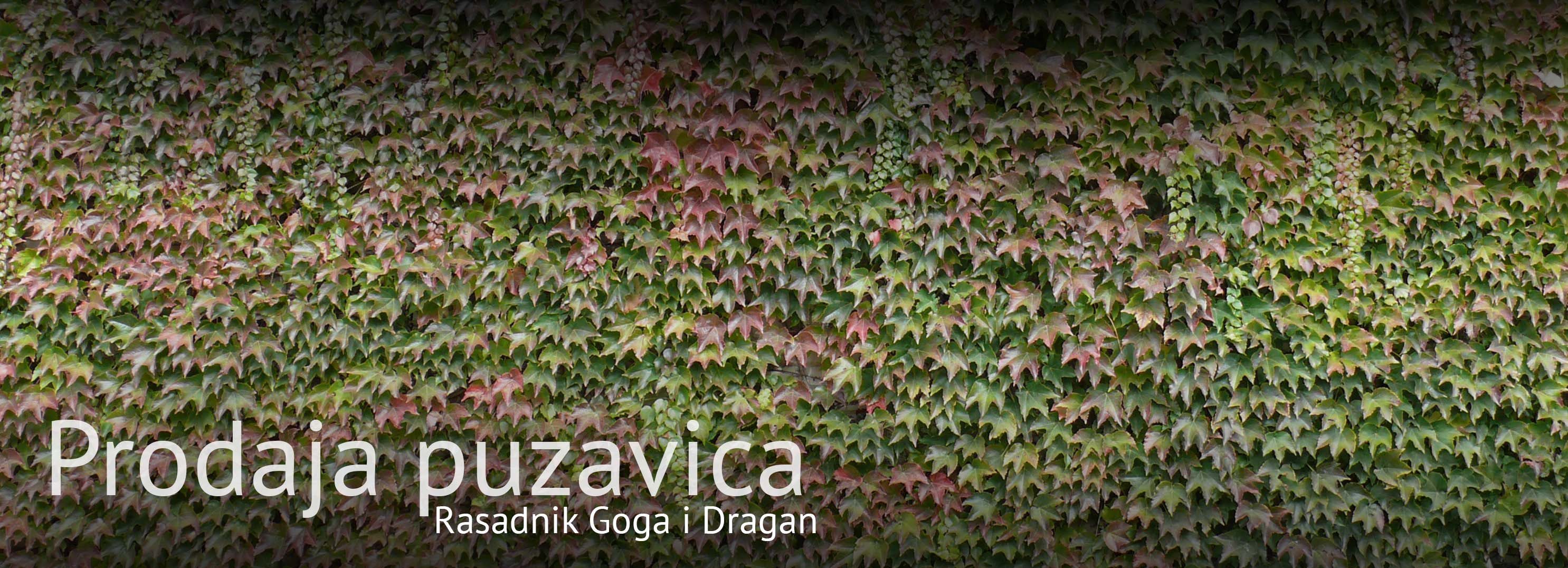 Puzavice