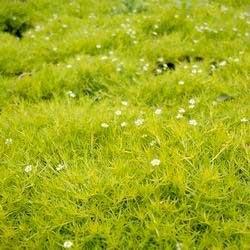 Biljke za terarijum