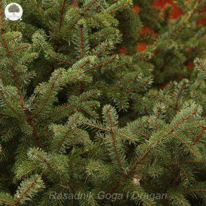 Novogodišnje drvce, novogodišnje jelke prodaja